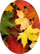 William Nagel